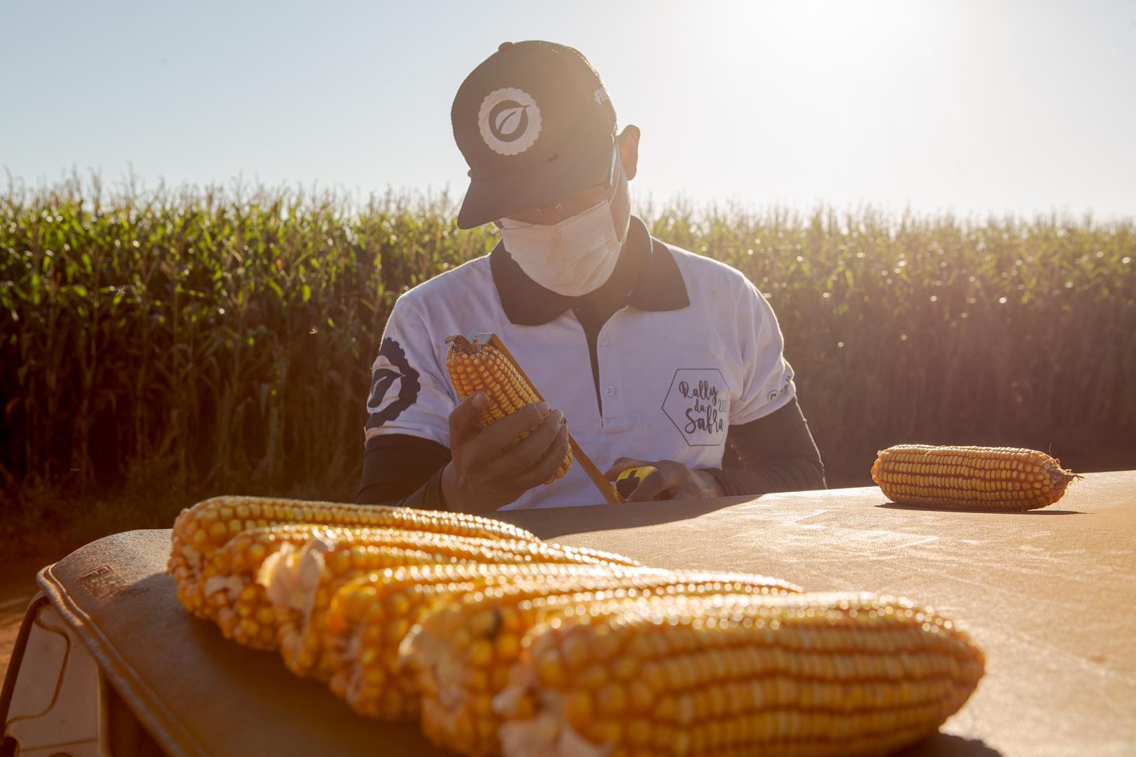 segunda safra de milho será avaliada pelas equipes do Rally da Safra no Paraná e no Mato Grosso do Sul
